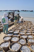 Lagi, Vietnam - February 26, 2012: Fisheries are located on the beach in many baskets waiting for uploading onto the truck to the processing plant — Stock Photo