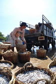 Lagi, Vietnam - February 26, 2012: Local fishermen are uploading fisheries onto the truck to the processing plant in Lagi beach — Stock Photo
