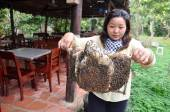Ben Tre, Vietnam - January 1, 2014: A woman is showing her beekeepers tray from her farm in Ben Tre city. — Photo
