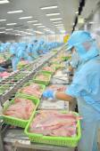 Can Tho, Vietnam - July 1, 2011: Workers are filleting pangasius catfish in a seafood factory in the Mekong delta of Vietnam — Stock Photo