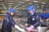 Can Tho, Vietnam - July 1, 2011: Workers are killing pangasius catfish before transfering them to the next processing line in a seafood factory in the Mekong delta of Vietnam — Stock Photo