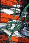 Nha Trang, Vietnam - May 5, 2012: Tuna fish in the basement of the boat in the sea of Nha Trang bay — Stock Photo