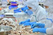 Vung Tau, Vietnam - December 9, 2014: Workers are classifying octopus for exporting in a seafood processing factory — Stock Photo