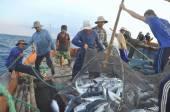 Nha Trang, Vietnam - May 5, 2012: Fishermen are collecting tuna fish caught by trawl nets in the sea of the Nha Trang bay — Stock Photo