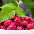 A plate full of fresh ripe raspberries with green leaf raspberry — Stock Photo #75956855