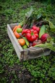 Vegetables in a box — Stock Photo