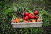 Bir kutu içinde sebze — Stok fotoğraf
