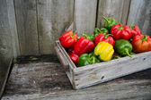 Colorful peppers — Foto de Stock