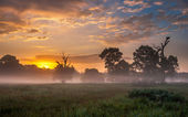 Sunrise over the ancient oak trees — Stock Photo