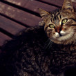 Постер, плакат: Cat in brown subtle and warm color tones