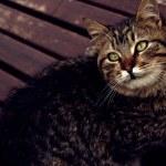 Постер, плакат: Cat in brown subtle and warm color tones