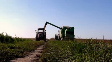 Combine-harvester unloading soybeans in tractor trailer on filed — Stock Video