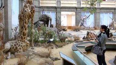Woman taking photos in zoological museum. — Stock Video