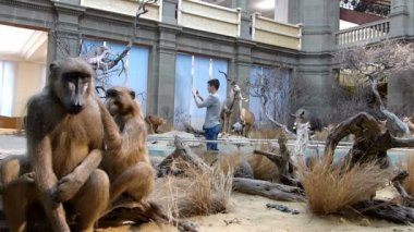 Teenager taking photos in zoological museum. — Stock Video