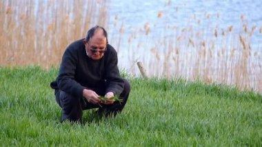 Senior farmer checking wheat in spring — Stock Video