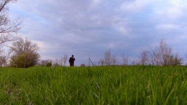 Senior farmer checking wheat before spring rain. — Stock Video