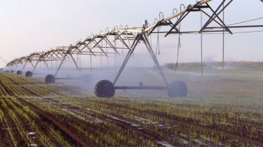 Agricultural field irrigation. — Stock Video
