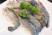 Fresh Shrimp with parsley — Stock Photo