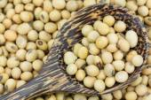 Close up soy bean in wooden spoon — Stock Photo