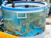 Fresh live fish at the aquarium — Stockfoto