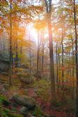 Autumn forest in the mountains — Stock Photo