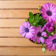 Beautiful purple daisies with space for text — Stock Photo #75720591