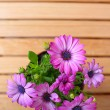 Beautiful purple daisies with space for text — Stock Photo #75720619