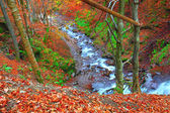 Rapid mountain river in autumn — Stock Photo