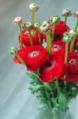 Bouquet rosso colorato di fiori di primavera ranuncolo sul vaso — Foto Stock