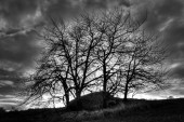 Mystical monolith hidden under trees before storm B&W photography — Stock Photo