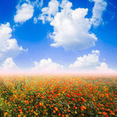Yellow cosmos flower and the blue sky — Stock Photo