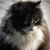 Black & White cat — Zdjęcie stockowe