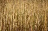 Grass texture. — Stock Photo