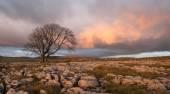 Lone Tree, Yorkshire Dales — Stock Photo