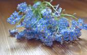 Forget me nots lying on the table — Stock Photo