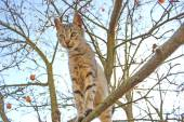 Cat staying on branch of tree — Stock Photo