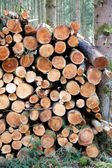 Woodpile in a forest — Stock Photo