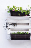 Pallet ideas for gardening — Stock Photo