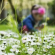 Spring blossom in the grass — Stock Photo #72052581
