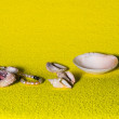 Pearl beads, antique amphora and sea shell on a yellow backgroun — Stock Photo #75270719