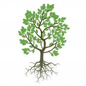Tree, Roots and Green Leafs. Vector Illustration. — Stock Vector