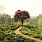 Red tree on tea plantation — Stock Photo #70209473