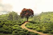 Red tree on tea plantation — Stock fotografie