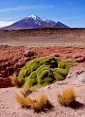 Beautiful Altiplano mountains. — Stock Photo