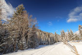 Winter, forest, snow road — Stock Photo