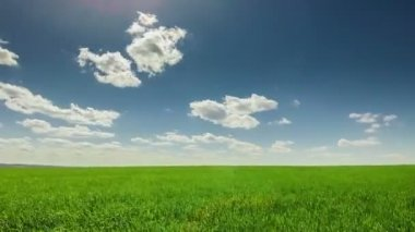 Clouds over the green field — Stock Video