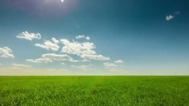 Green field, clouds, blue sky, sunny — Stock Video