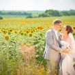 Bride and groom on sunflower field — Stock Photo #75143277