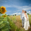 Bride and groom on sunflower field — Stock Photo #75143295