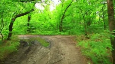 Woods forest. trees background. green nature landscape. wilderness — Stock Video